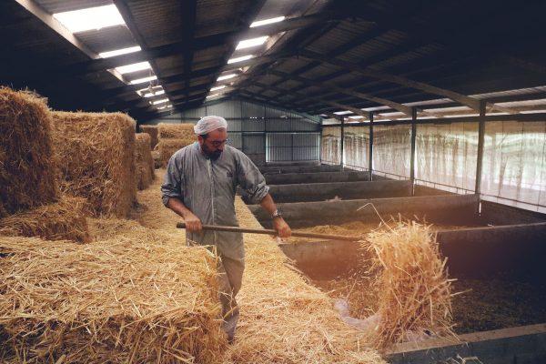 Cédric Perrocheau porc bio